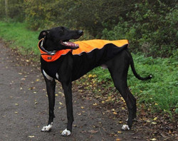 Lurcher Soft Shell Jacket