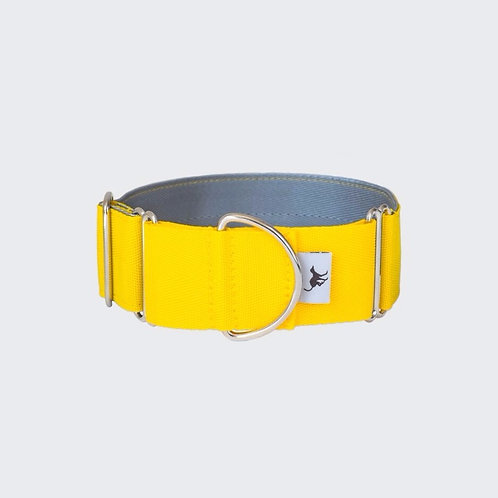 Greyhound, whippet, lurcher martingale collar yellow. Pointy Faces
