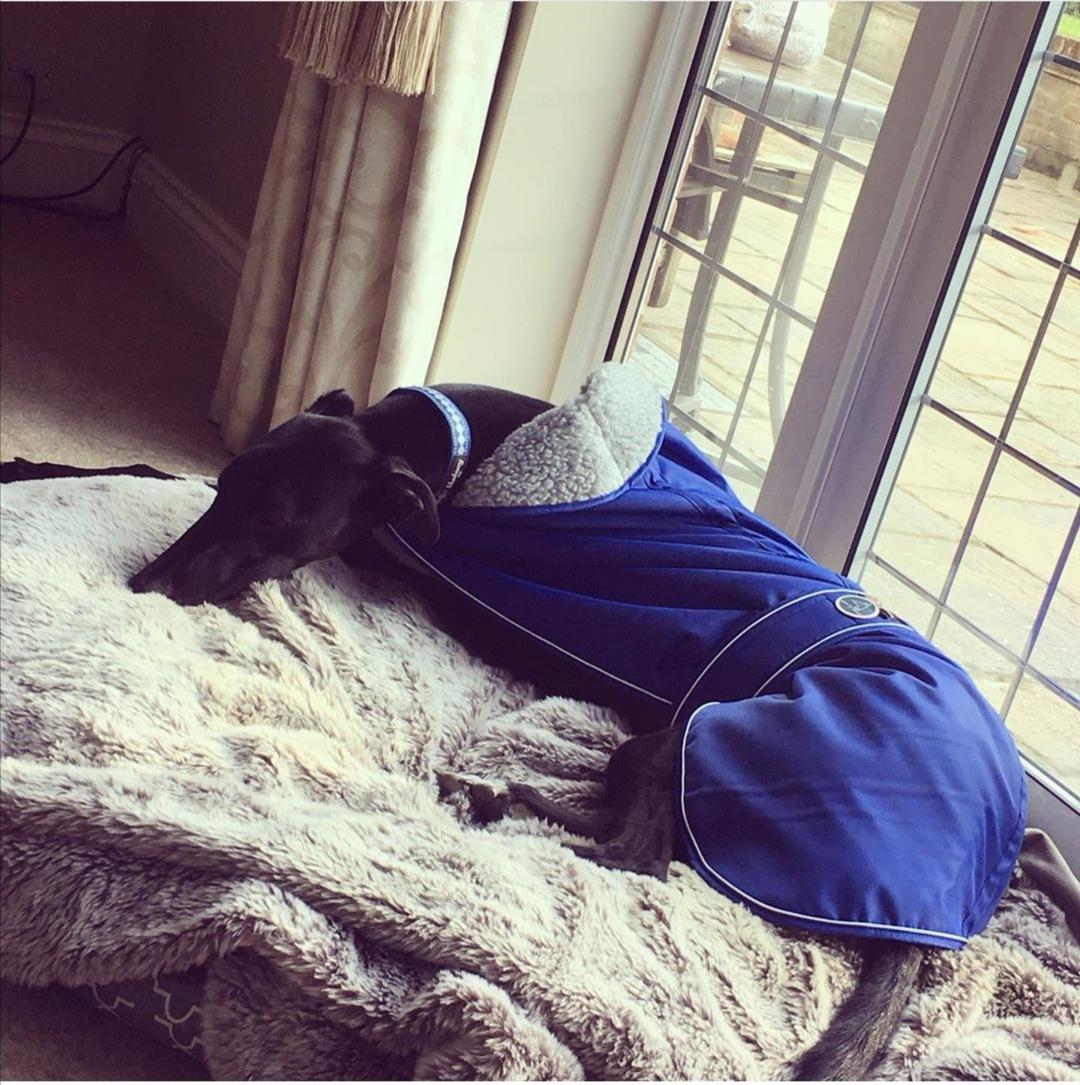 Pointy Faces Geyhound Coat UK blue