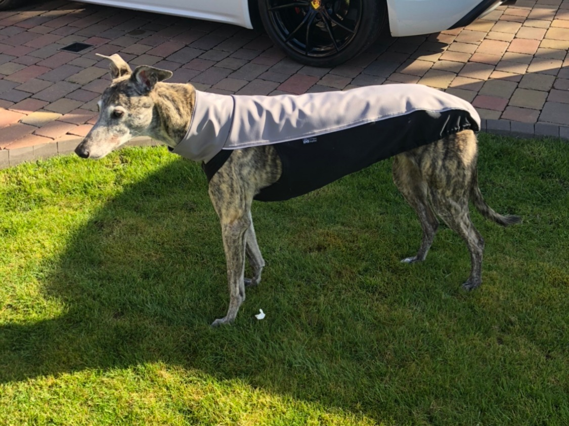 Greyhound Soft Shell Jacket in Grey