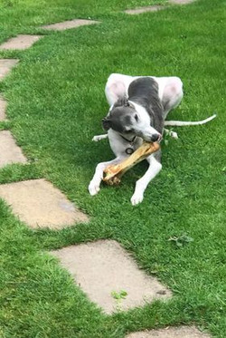 Ostrich Bone for Dogs