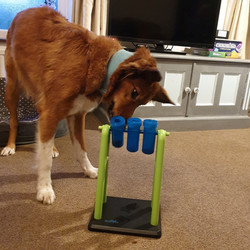 Dog Enrichment Toy UK