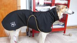 borzoi winter coat