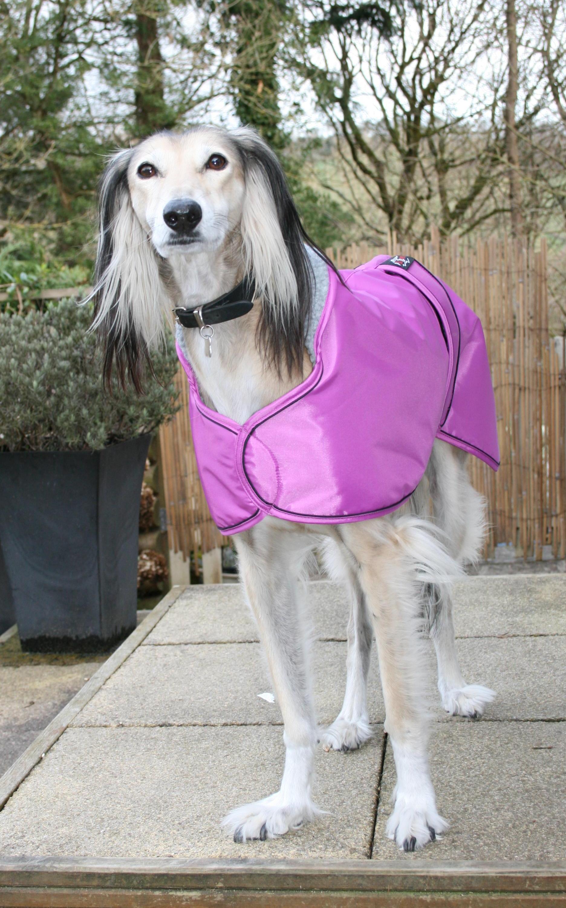 Saluki Lurcher Winter Waterproof Coat