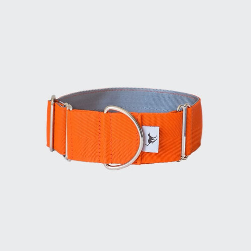 greyhound whippet lurcher martingale collar orange. Pointy Faces