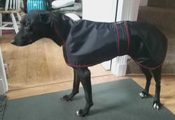 Lurcher Raincoat in Black