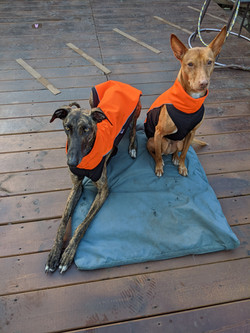 Sighthound jumpers and coats
