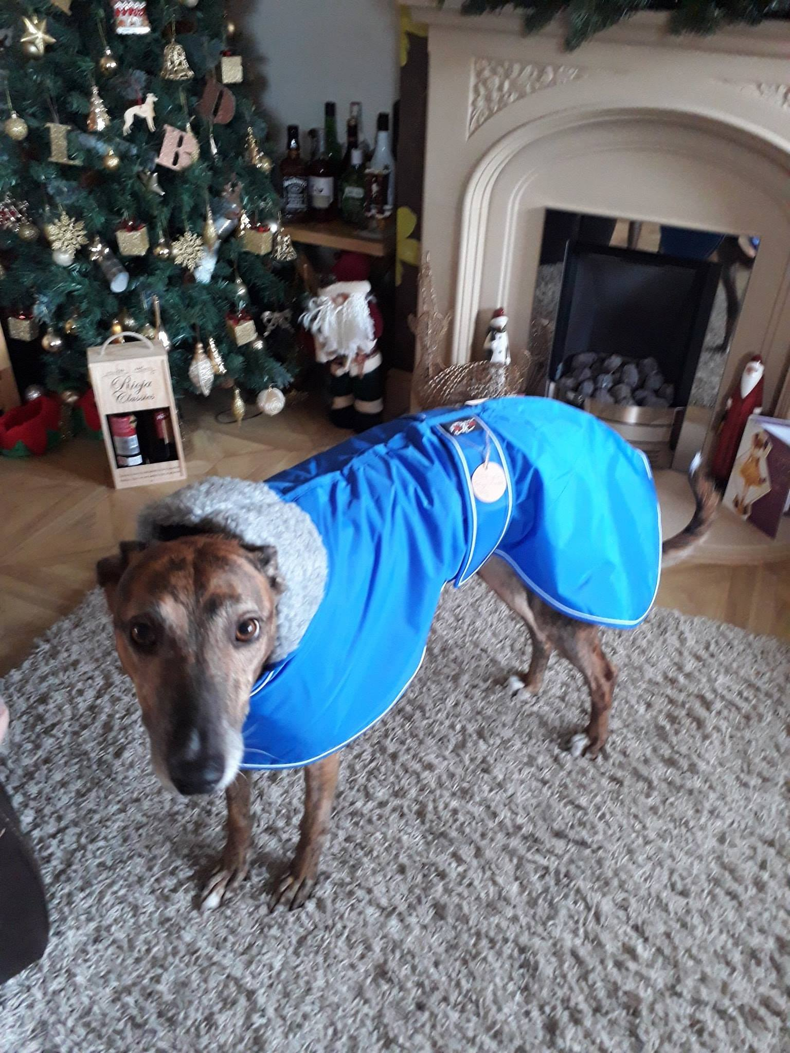 Greyhound lurcher coat blue UK