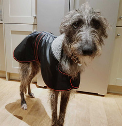 Pointy Faces Lurcher Raincoat Black UK N