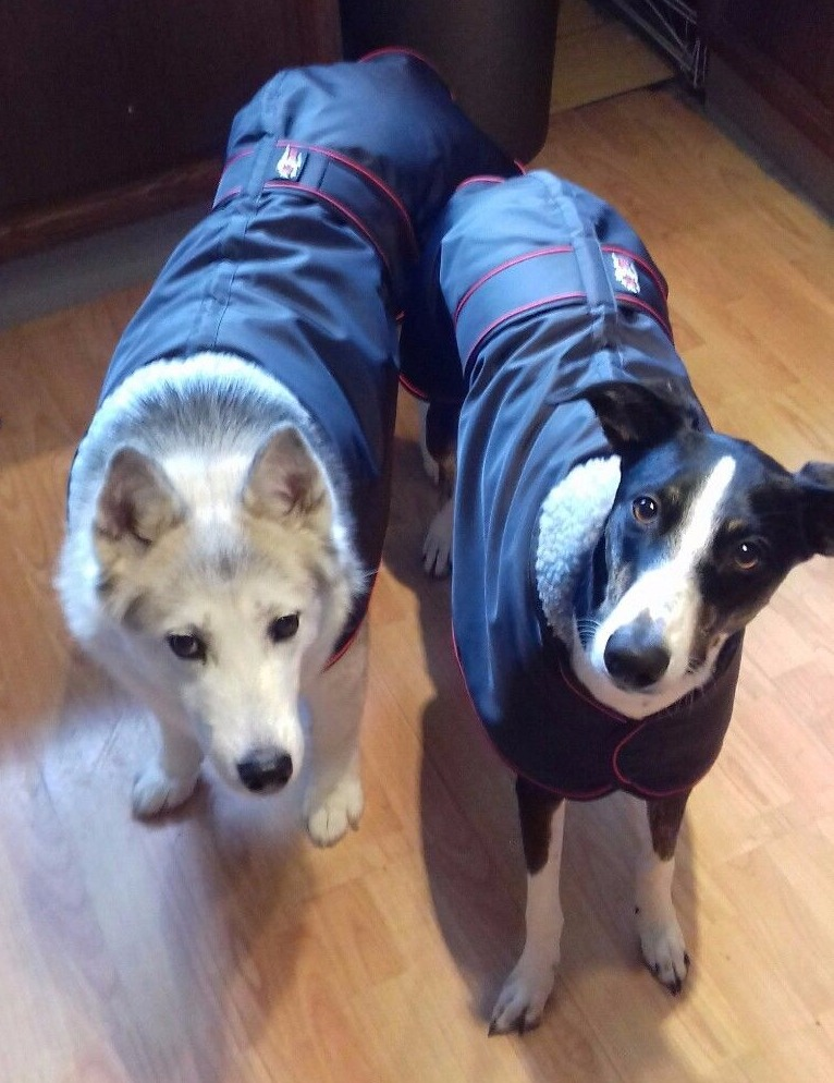 Pointy Faces winter coats