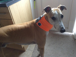 Pointy Faces Reflective Dog Snood Orange