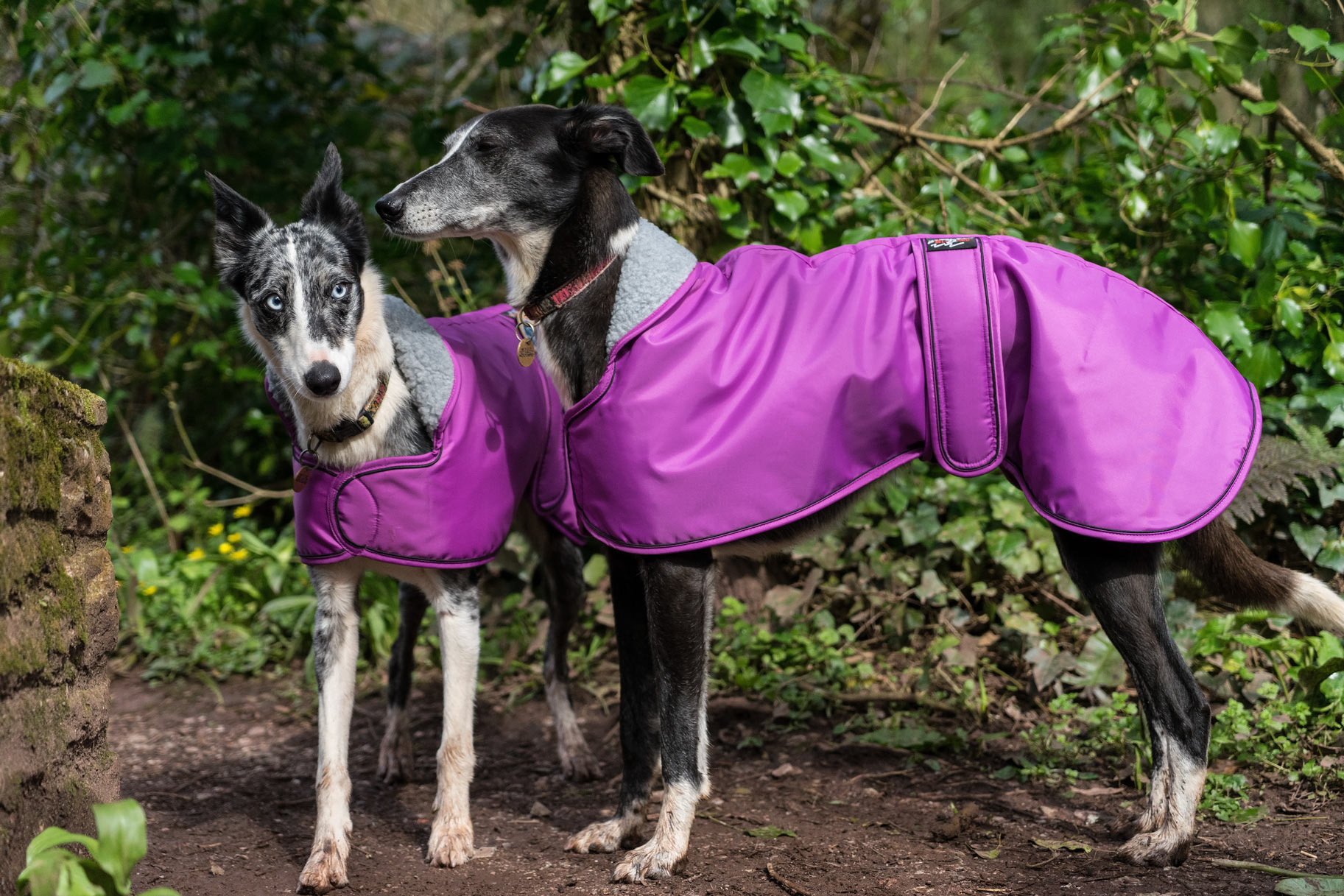 Pointy Faces Cerise Sighthound Coats
