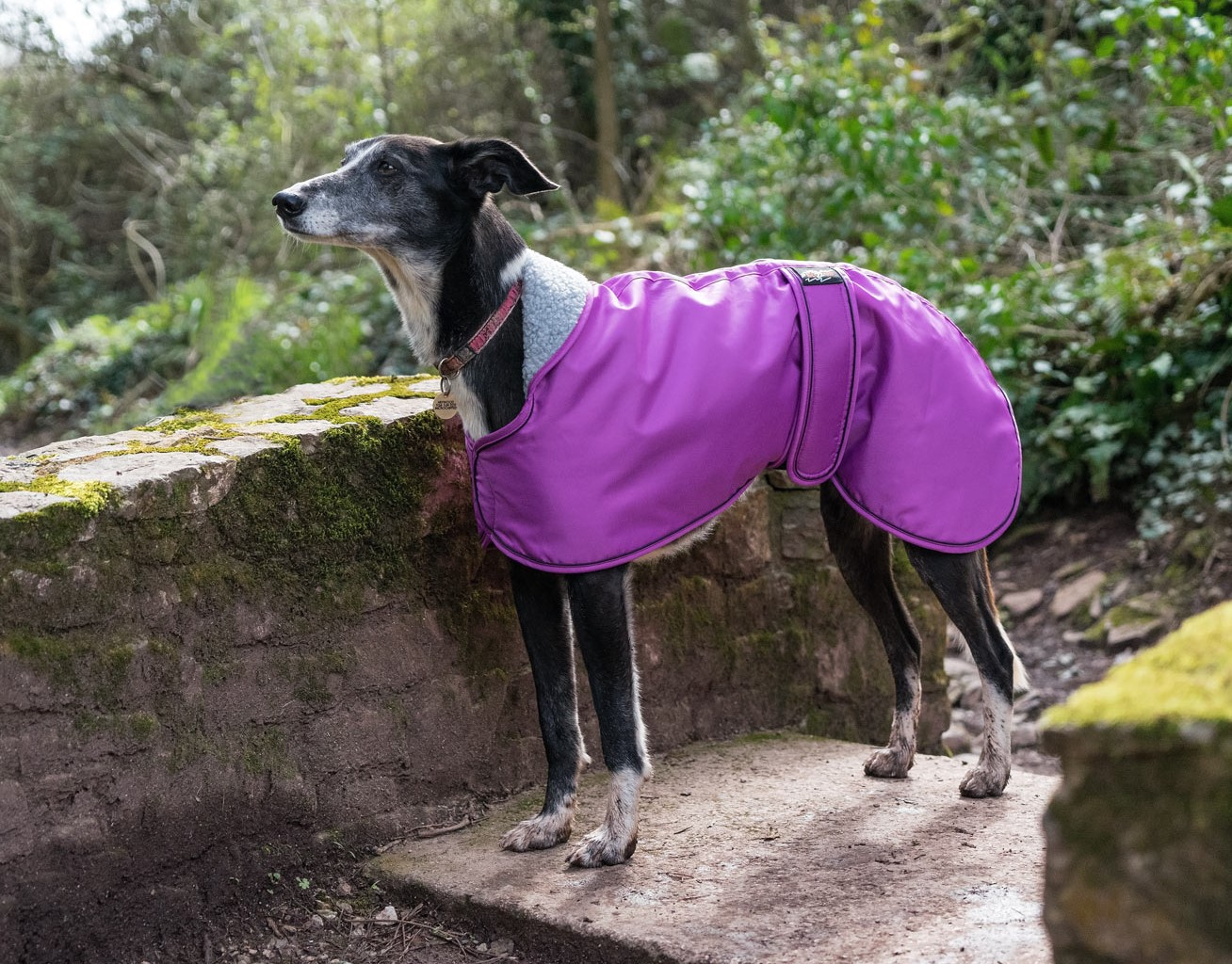 Pointy Faces Cerise Greyhound Coat 2