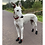 Greyhound Boots Black