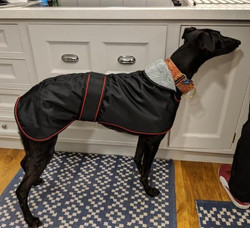 Pointy Faces Whippet Winter Coat Black