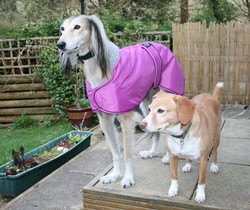 Saluki Lurcher Winter Coat from Pointy F