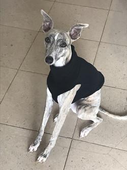 Whippet Fleece Under Vest in Black