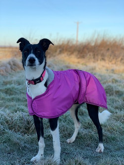 Pink Lurcher Winter Coat