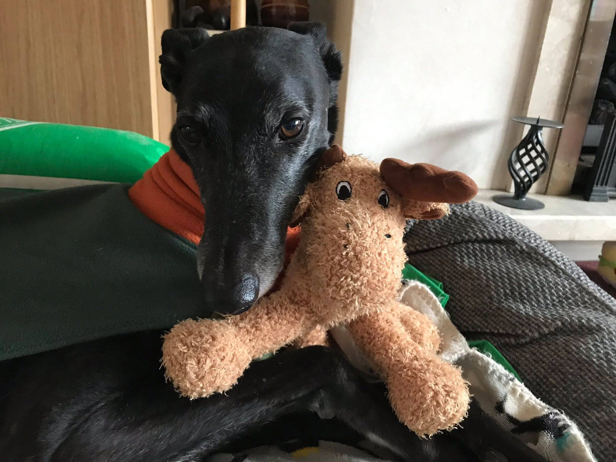 Pointy Faces best toys for Greyhounds