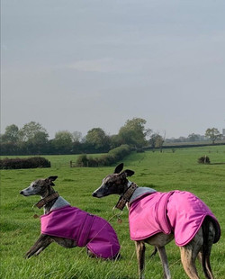 Pointy Faces Galgo Coats UK
