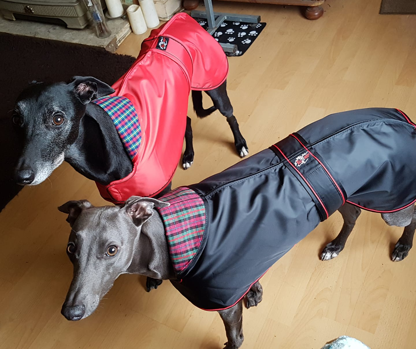 Pointy Faces Whippet Lurcher Raincoats R