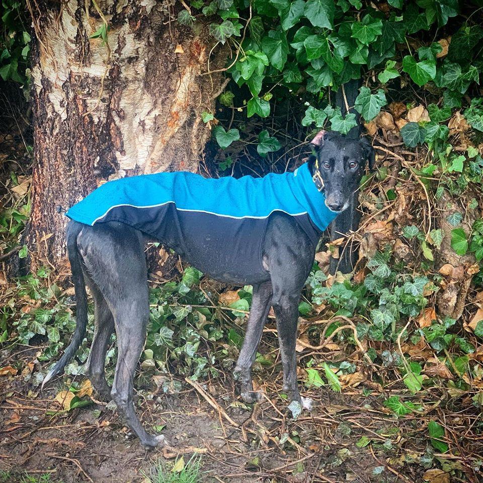 Greyhound Jacket UK