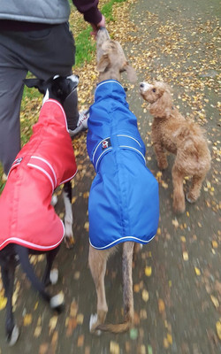 Pointy Faces Lurcher Whippet Coats