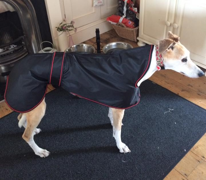 Pointy Faces Greyhound Raincoat