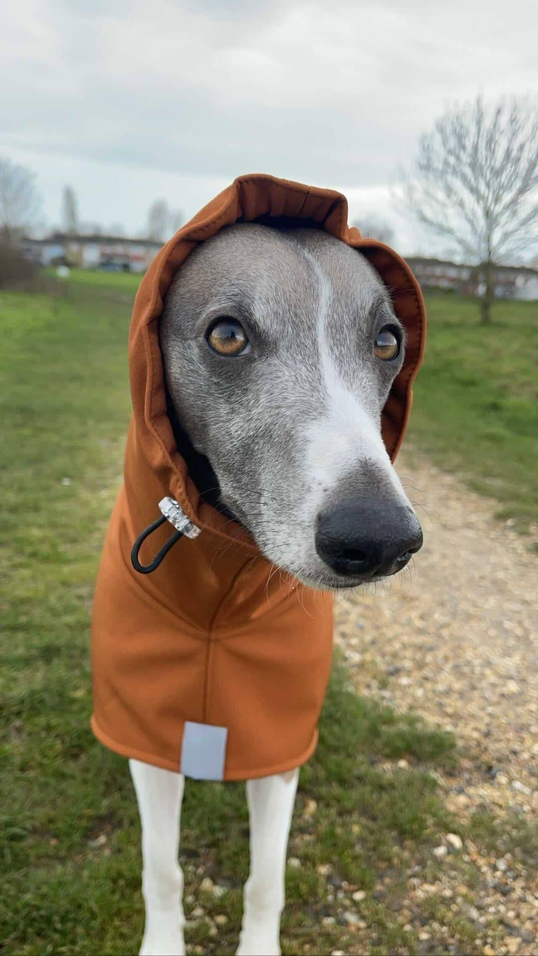 Whippet Raincoat with Snood