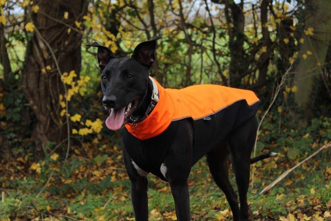 Sighthound Soft Shell Jacket