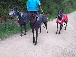 Greyhound Raincoats UK Pointy Faces