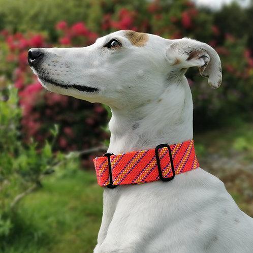 Martingale Collar Pink Greyhound Whippet Lurcher