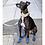 Greyhound Boots Blue