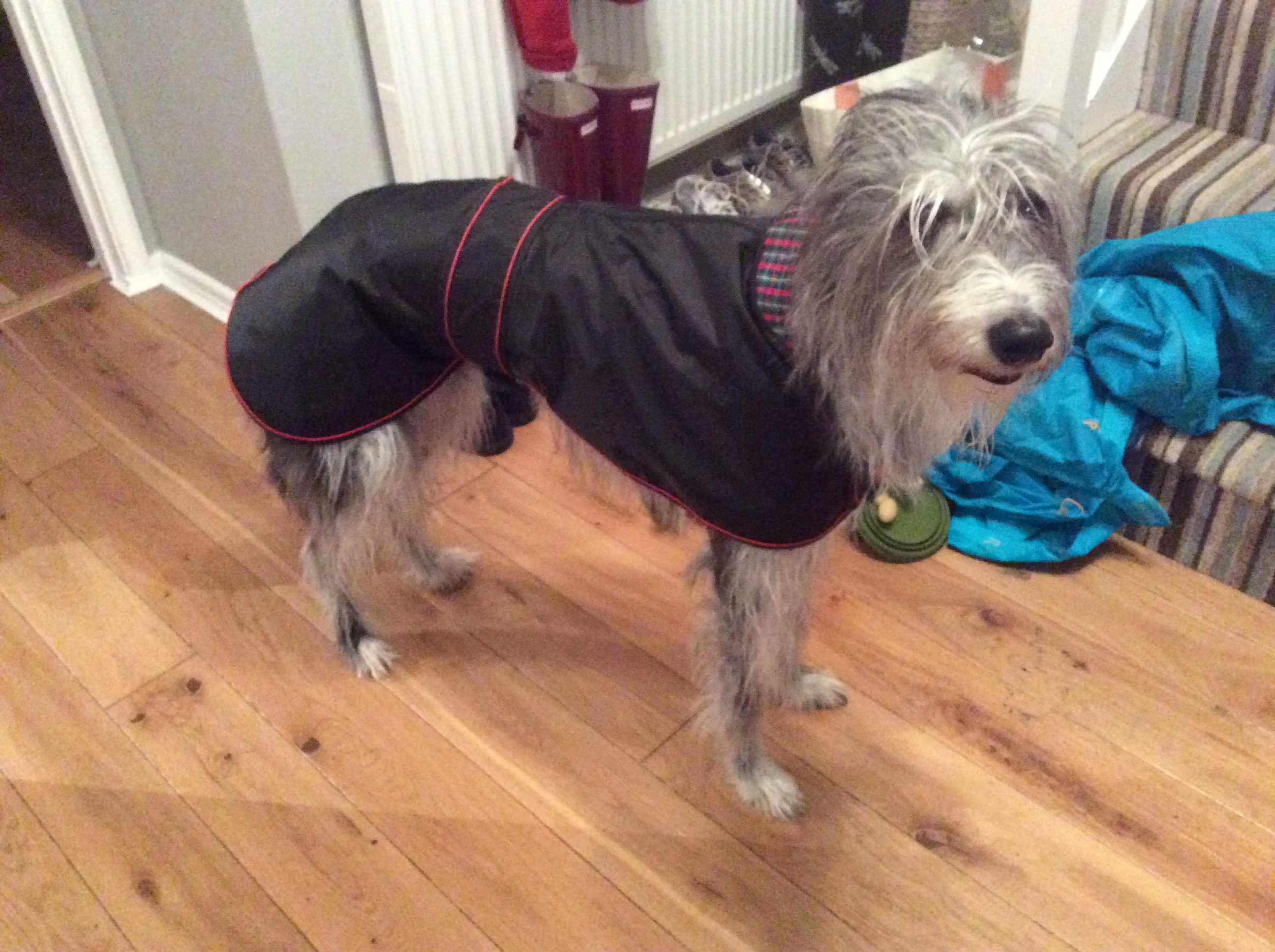 Lurcher raincoat UK