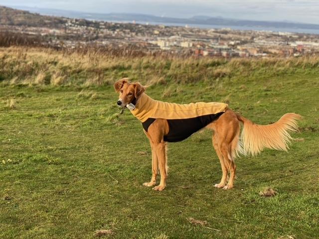sighthound saluki fleece jumper