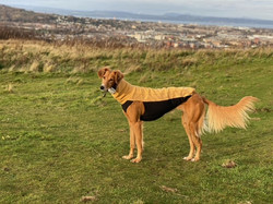 sighthound saluki fleece jumper