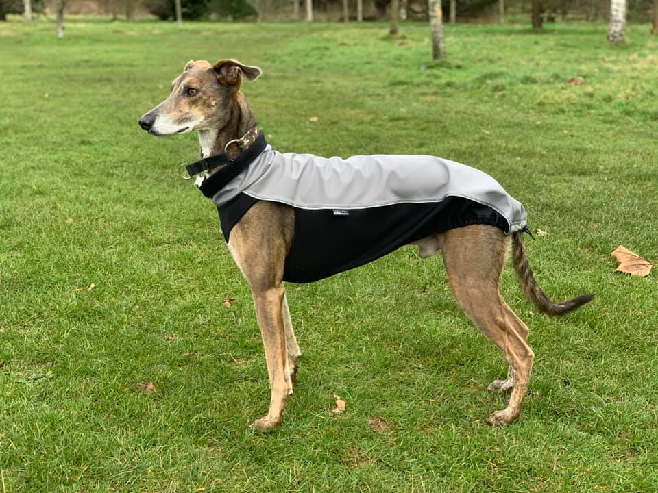 Pointy Faces sighthound Jacket Jimmy