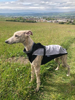 Whippet Outdoor Jacket Pointy Faces