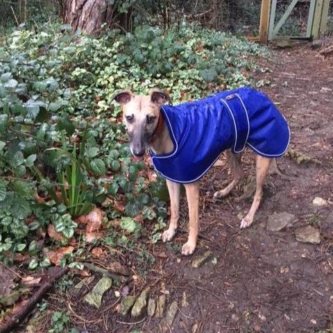 Whippet Coat Blue