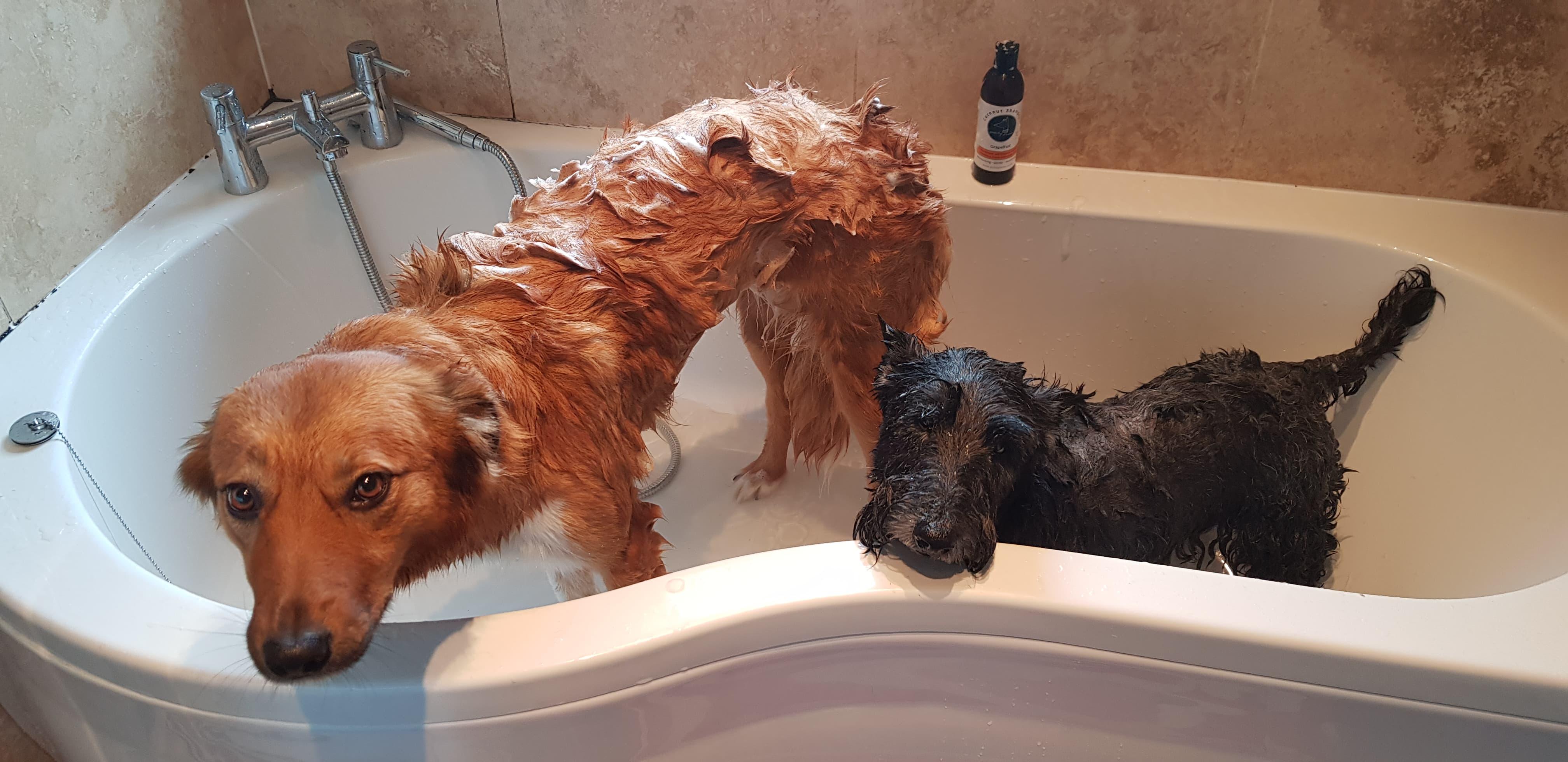 Pointy Faces Organic Dog Shampoo Grapefruit
