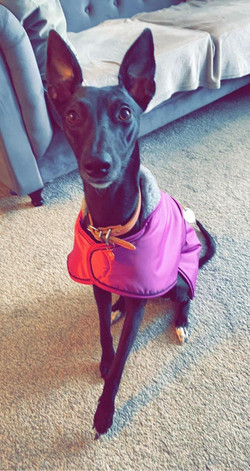 Whippet Coat Pink