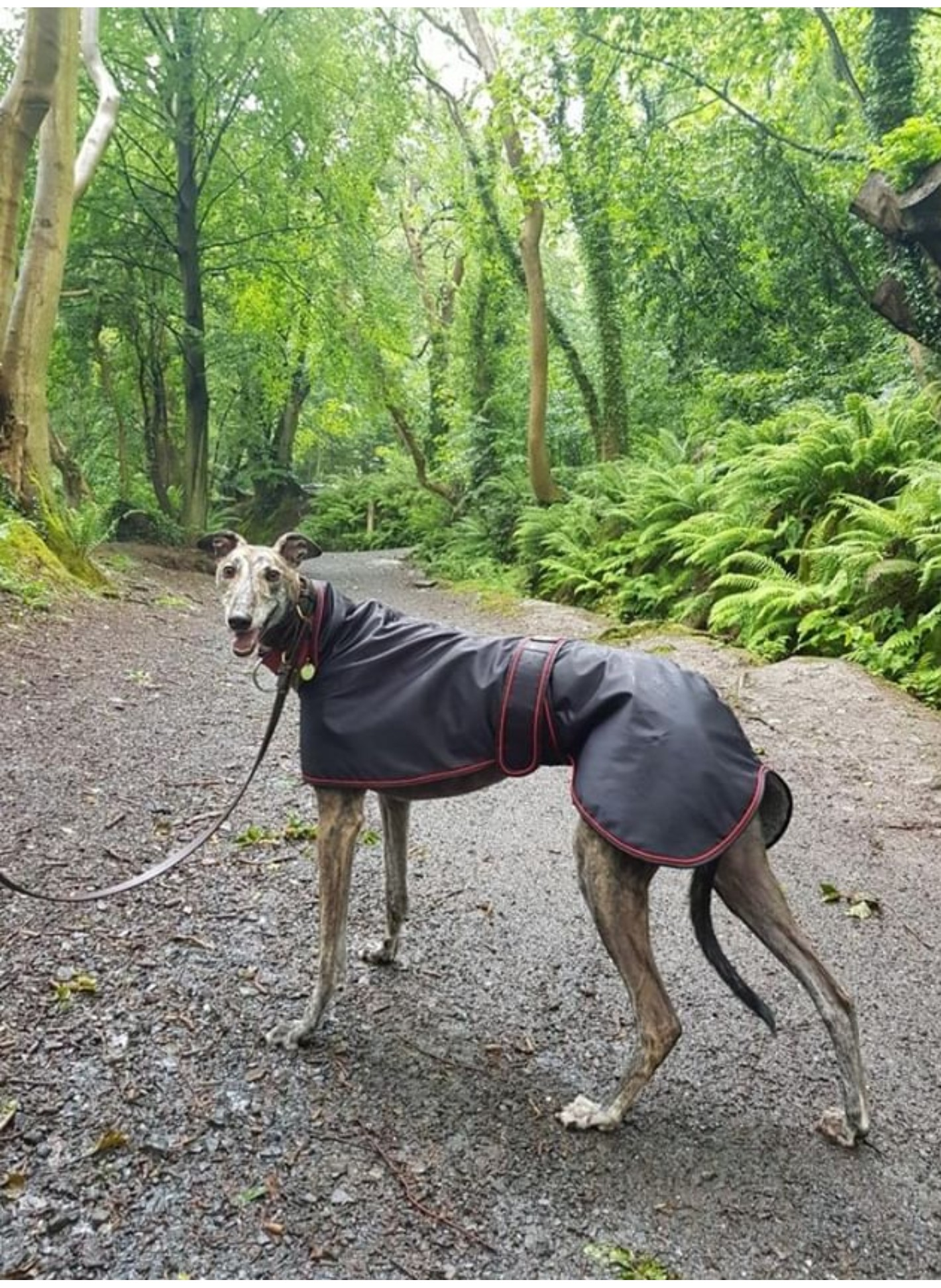 Pointy Faces Greyhound Raincoat Black