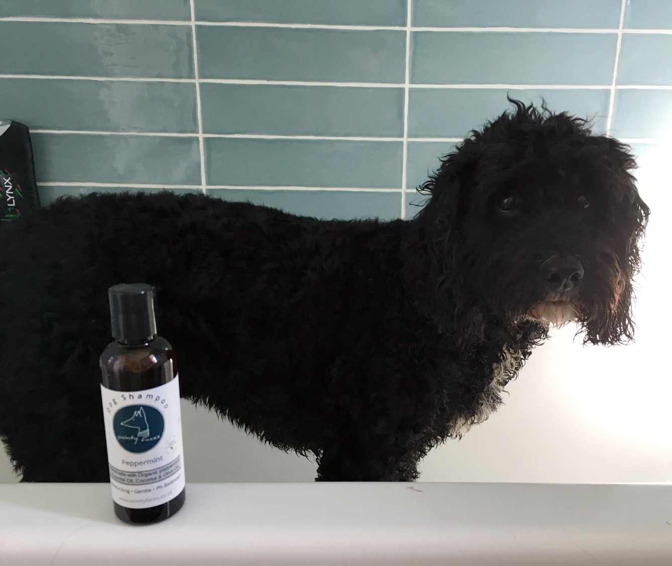 Pointy Faces Organic Dog Shampoo