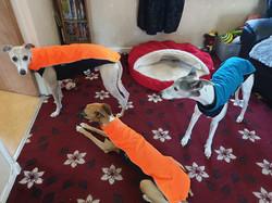 Whippet Jackets Jumpers High Visability