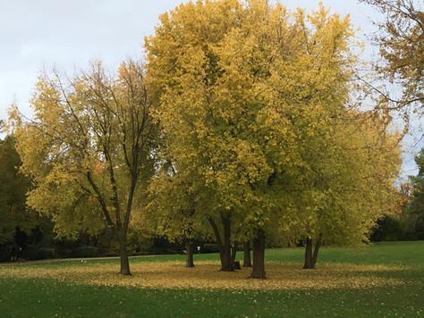 Les vœux pour l'automne