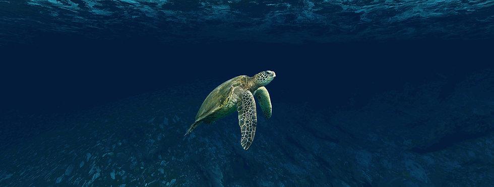 turtle-4032569.jpg