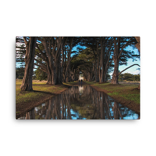 Cypress Tree Tunnel Canvas