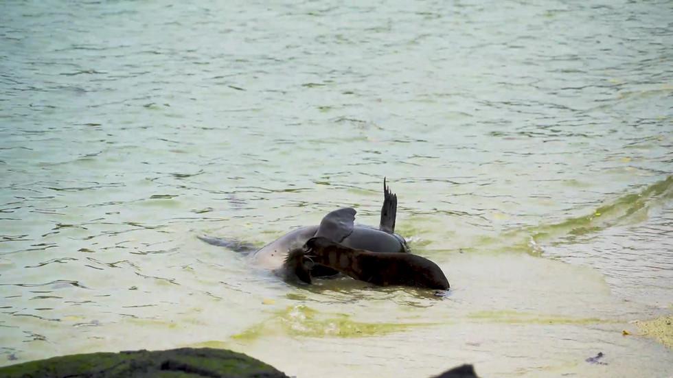 Sea lions.mp4