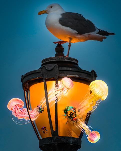 Seagull v2.jpg