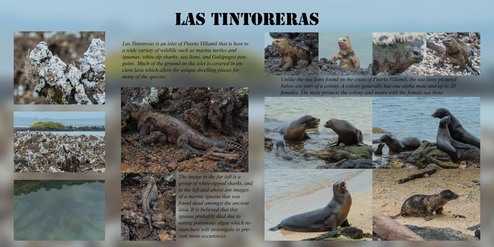 Las Tintoreras